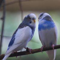 Vogeltjes show